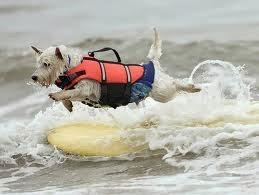 cães nadando na praia