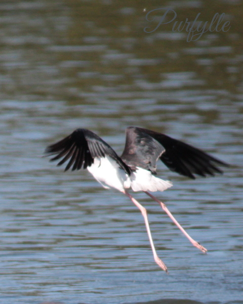 Stilt In Flight