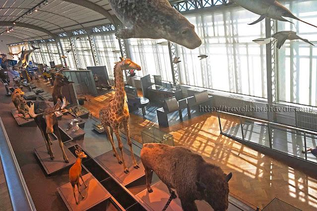Royal Museum of Natural Sciences Belgium Natural History Dinosaur Museum Brussels