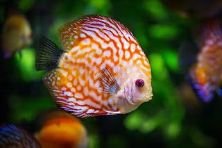 parasite fish facts