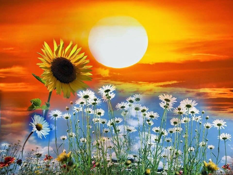 Flores da alma