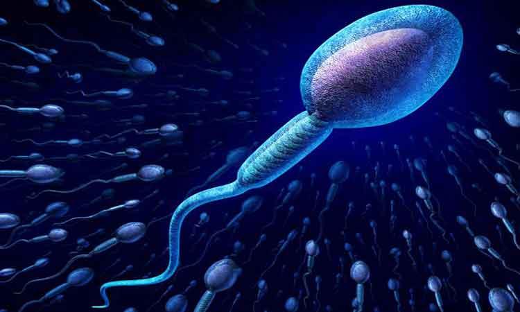 পুরুষের শুক্রাণু বৃদ্ধির উপায় - জীবনযাপন - লাইফস্টাইল খবর ও টিপস ম্যাগাজিন