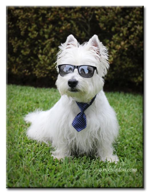 Pierre Westie in his tie and sunglasses