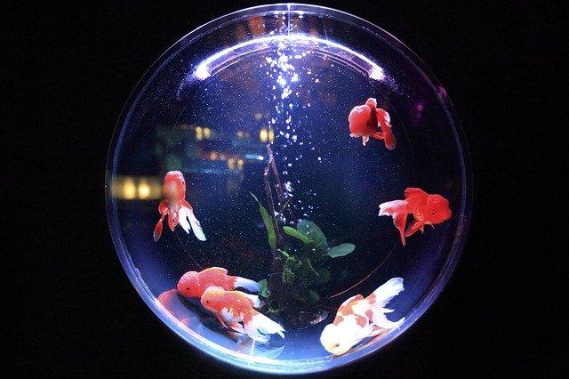 Jenis Ikan Yang Dapat Dipelihara Tanpa Oksigen