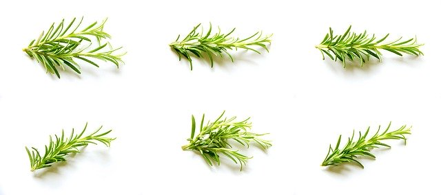 Benefits Of Rosemary Plant On The Skin rosemary benefits for skin how to make rosemary oil for skin rosemary oil for skin tightening benefits of rosemary tea how to use rosemary essential oil for face how to use rosemary oil how to dilute rosemary oil for hair rosemary essential oil for hair side effects