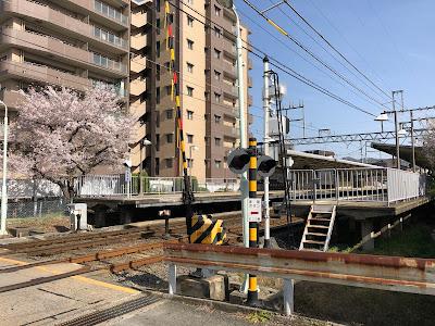 京阪交野線『郡津駅』の桜