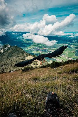 Gamsknogel und Kohleralm  Bergtour Inzell  Wanderung Chiemgauer Alpen 13