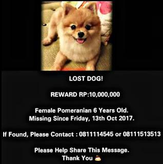 Dicari Anjing Hilang Yang Menemukan Dapat 10 Juta