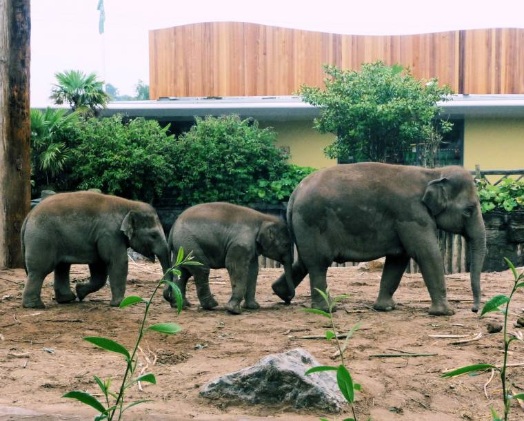 Elephants at the