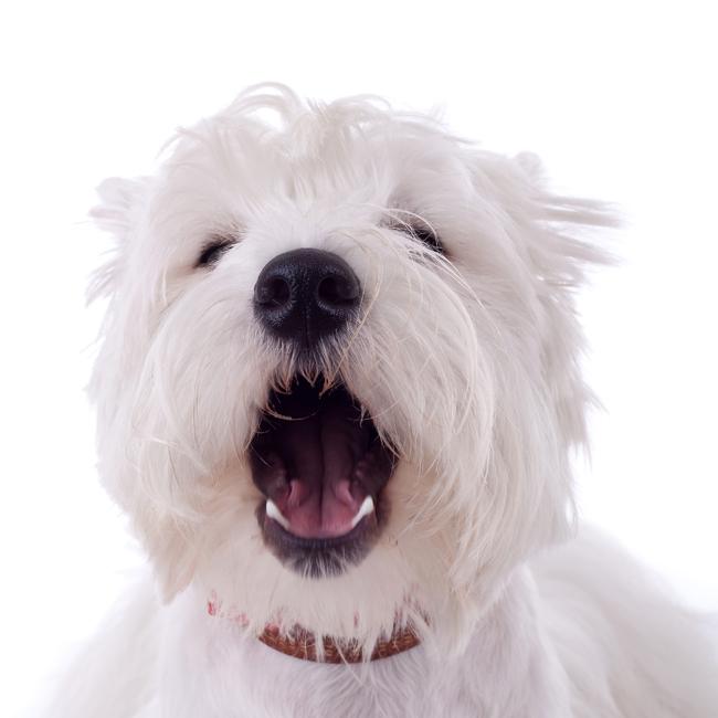 Psia mowa ciała