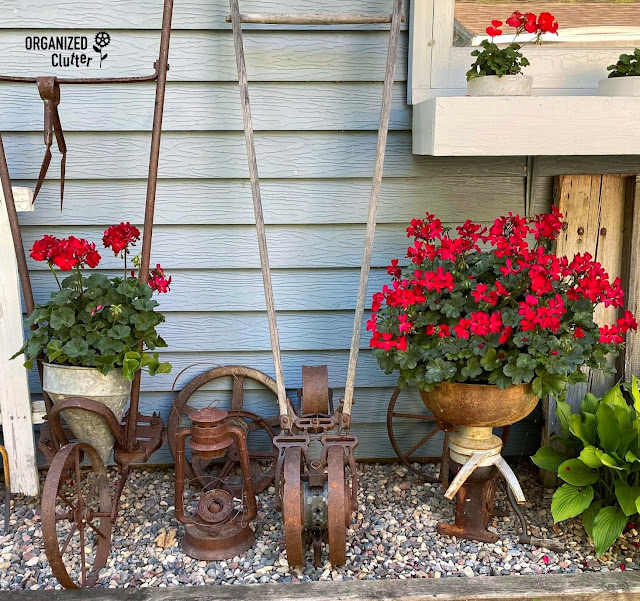 Photo of red geraniums planted in junk containers