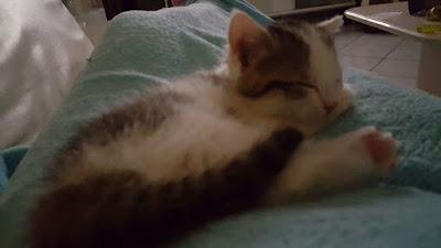 Mon chaton brestois 6%2Bjuin%2B16