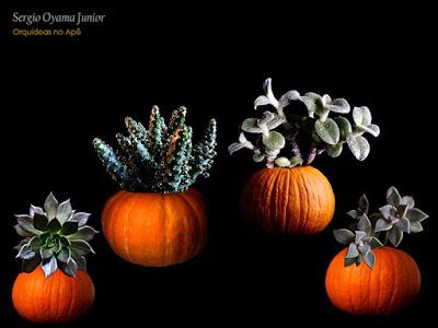 Halloween com cactos e suculentas