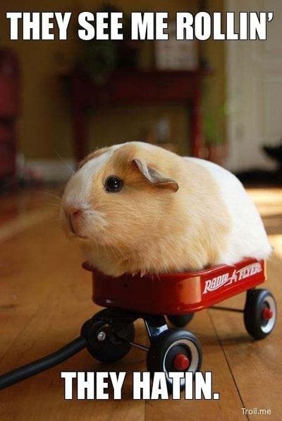 my wagon is boss