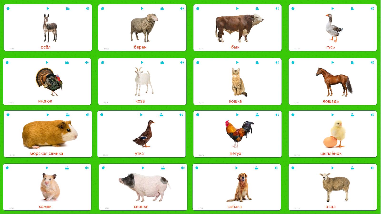 Картинки домашние животные карточки