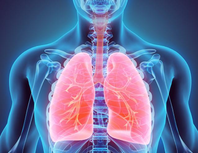 """Sistem Pernapasan dan Proses Pernapasan Dalam Tubuh Sistem Pernapasan Bernapas adalah bagian dari proses kehidupan yang sangat penting bagi manusia, yaitu dengan cara memasukkan udara ke dalam tubuh serta mengeluarkan sisanya keluar tubuh. Pada proses bernapas terjadi pertukaran oksigen (O2) dan karbondioksida (CO2) antara tubuh dan lingkungan.  Beberapa unsur udara yang masuk pada saat proses pernapasan adalah uap air, nitrogen (N2), karbondioksida (CO2), oksigen (O2), dan zat lain-lain. Unsur oksigen (O2) adalah salah satu zat yang paling banyak dibutuhkan dalam proses pernapasan karena oksigen ini berfungsi untuk mengoksidasi sebagian zat makanan berupa lemak dan karbohidrat.  Proses Pernapasan dalam Tubuh Mekanisme pernapasan terjadi secara sadar dan tidak sadar (otomatis pada saat tidur). Terjadi dua siklus utama yakni inspirasi dan ekspirasi. Proses inspirasi diawali dengan kontraksi pada otot antar tulang rusuk, lalu rongga dada membesar dan tekanan udara di paru-paru menjadi lebih rendah dari udara luar. Lalu ekspirasi, yakni saat otot antar tulang rusuk berelaksasi, lalu rongga dada menyempit sehingga paru-paru ikut menyempit dan udara dalam rongga dada dan paru-paru keluar.   Nah itu dia bahasan dari sistem pernapasan dan proses pernapasan dalam tubuh manusia, melalui bahasan di atas bisa diketahui mengenai sistem dan proses pernapasan pada tubuh manusia. Mungkin hanya itu yang bisa disampaikan di dalam artikel ini, mohon maaf bila terjadi kesalahan di dalam penulisan, dan terimakasih telah membaca artikel ini.""""God Bless and Protect Us"""""""