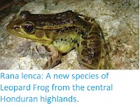 https://sciencythoughts.blogspot.com/2018/03/rana-lenca-new-species-of-leopard-frog.html