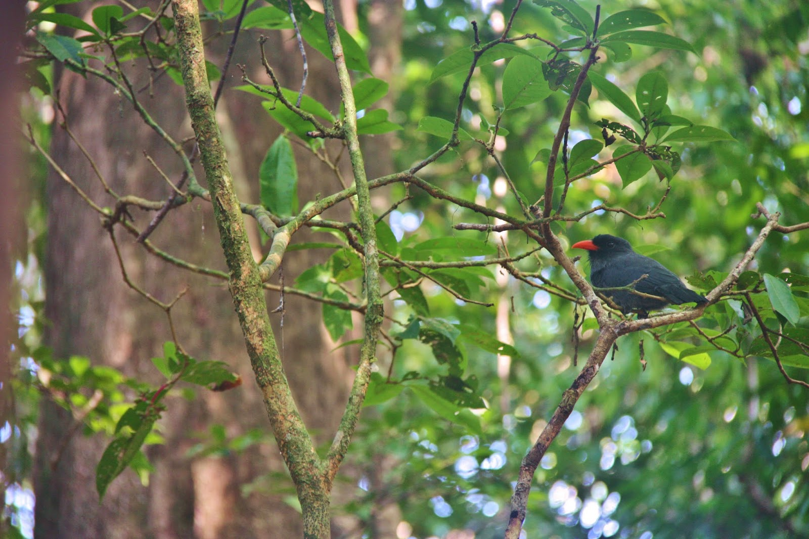 Pássaro na selva amazônica