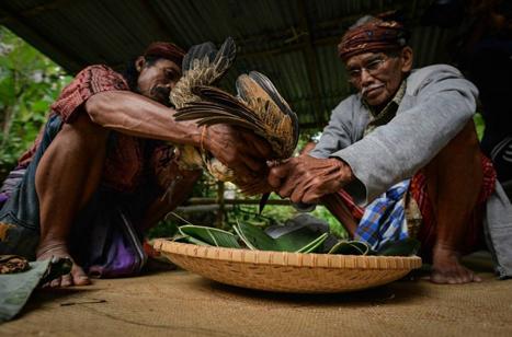 Tominaa Dan Tomebalun Serta Tugasnya Sebagai Pemimpin Adat Suku Toraja