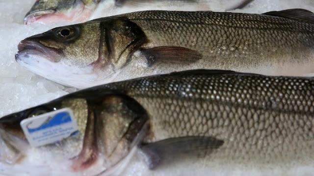 Άλλο πληρώνουμε και άλλο τρώμε - Απάτες στα ψαρικά σε παγκόσμια κλίμακα και την Ελλάδα