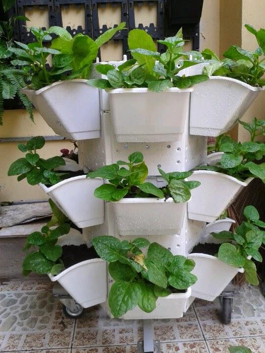 Kết quả hình ảnh cho modul trồng rau