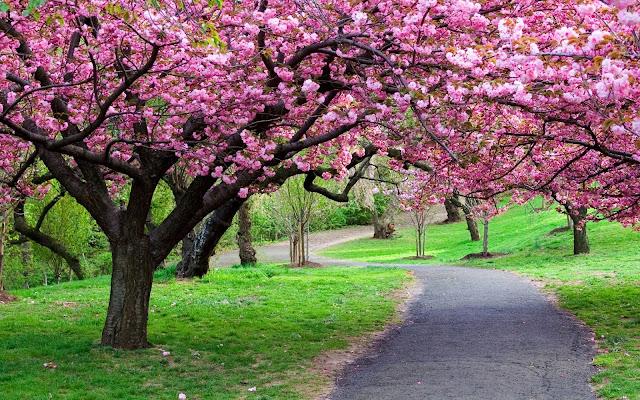 6. Taman Sakura, Kebun Raya Cibodas