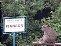 Wisata Kera Plangon: Tempat Wisata di Cirebon Unik, Lengkap Sekaligus Penuh Mistis