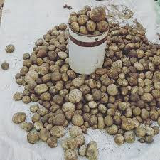 recipe,mushroom,mushroom types,mushroom recipes,maangchi's mushroom soup recipe,recipes,tuber mushroom recipes,mushrooms,( bastar boda ) tuber mushroom recipes,tuber,stuffed mushroom recipe,quick mushroom recipe,best mushroom recipe ever,simple mushroom recipe,vegan recipes,mushroom soup recipe,sauteed mushrooms recipe,easiest stuffed mushroom recipe,tuber (organism classification)