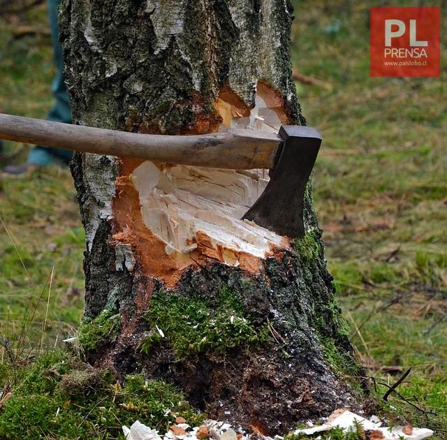 Talo un árbol y dejó sin electricidad a 3 regiones