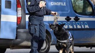 Unità cinofila Polizia utilizzata per scovare marijuana