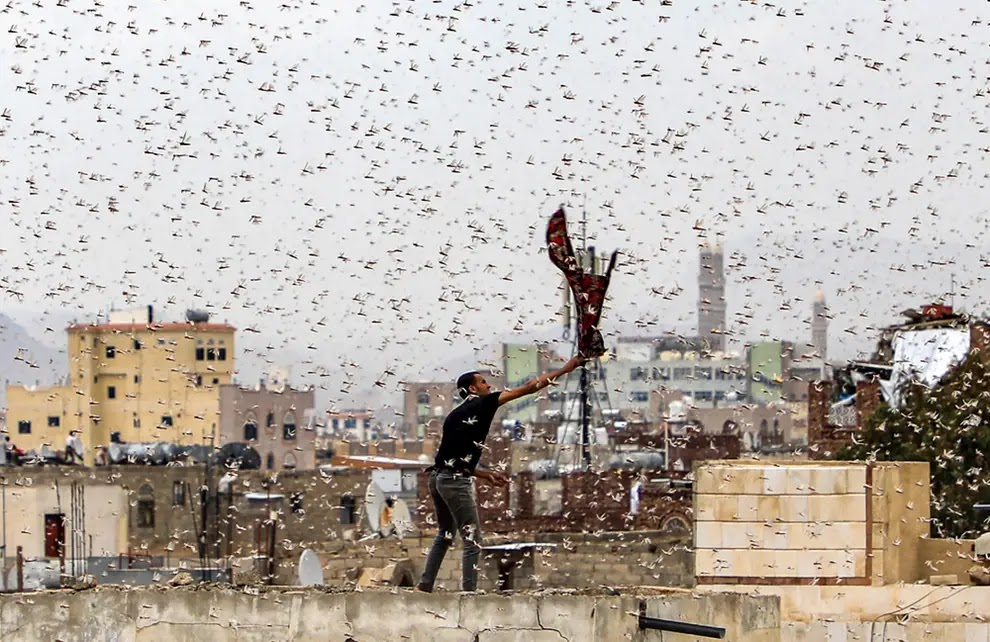 Plague of Locusts Africa