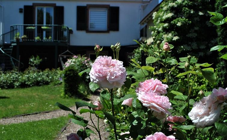 Nachbars Garten - Blick über den Zaun