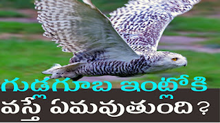 unbelievable & interesting facts about owl