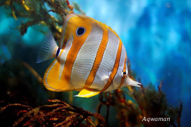 Les shooters de la photographie amateur poissons exotique - Poisson shark aquarium ...