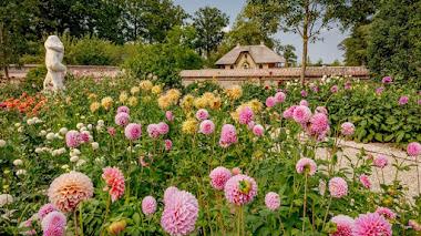 Visita virtual al jardín de dalias en el Castillo de Keukenhof