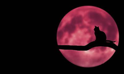 Este viernes 5 de junio, no puedes perderte el eclipse lunar-TuParadaDigital