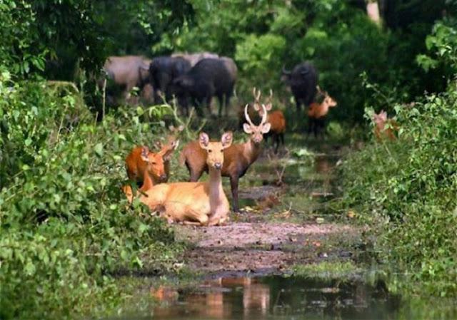 300-deaths-in-Assam-floods-in-horrific-floods