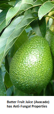 Butter Fruit Juice (Avocado) has Anti-Fungal Properties