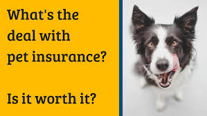 Pet Insurance Tips Pet Owners Should Know