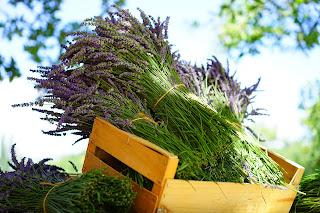 أفضل الأعشاب الطبية لمكافحة السرطان