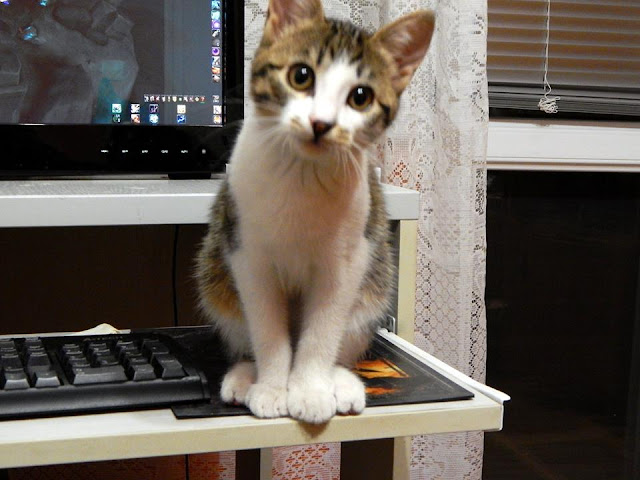 cat on a computer