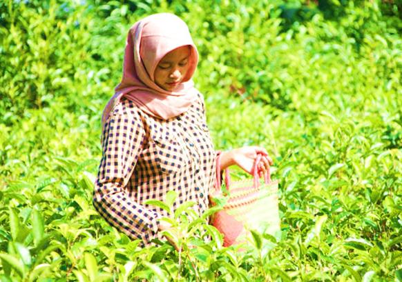 Tradisi Moci - Tradisi Minum Teh Dari Jepang-nya Indonesia