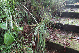 Lightning strike hits ground and digs hole in Puriscal