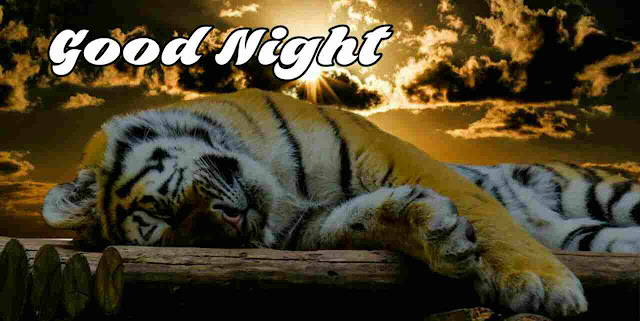 Good Night Images sleeping tiger , Photos, Greetings and HD Pictures