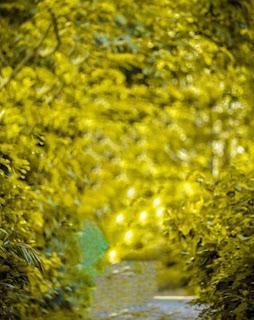 Bokeh Blur Background Free Stock Image