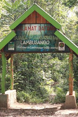 lokasi hutan lindung lambusango
