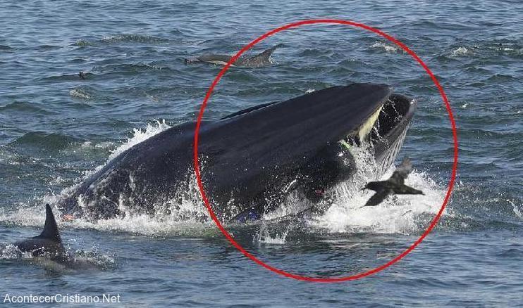 Hombre tragado por ballena