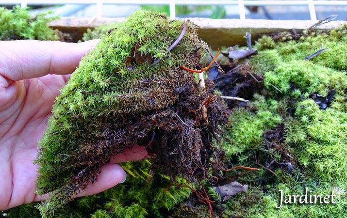 Plantar Musgo. Stunning Musgo With Plantar Musgo. Interesting ...