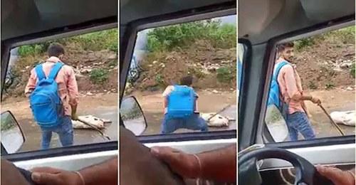 हिमाचल : पोस्टमैन ने कुत्ते को पीटा, बेहोश होने के बाद भी पीटता रहा