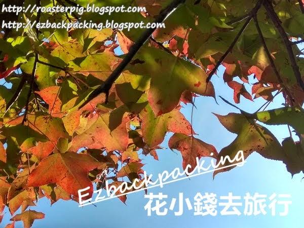屯門紅葉: 麥理浩徑10段簡單行山看紅葉